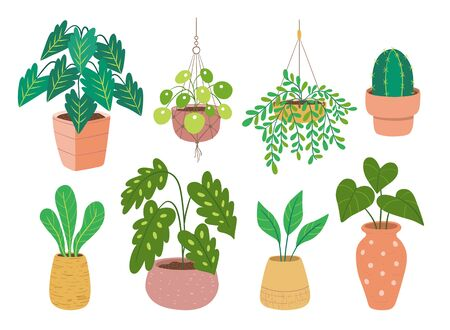 Collection of houseplants isolated on white background. Set of eight decorative indoor and office plants in pot. Flat colorful vector illustration. Set 3 of 4.