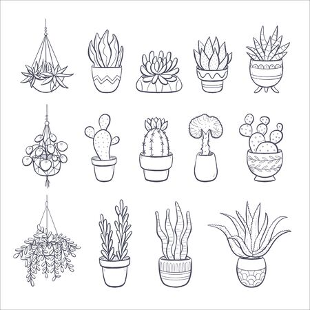 Collection of hand drawn succulents and cactus isolated on white background. Set of 14 decorative plants growing in pot.
