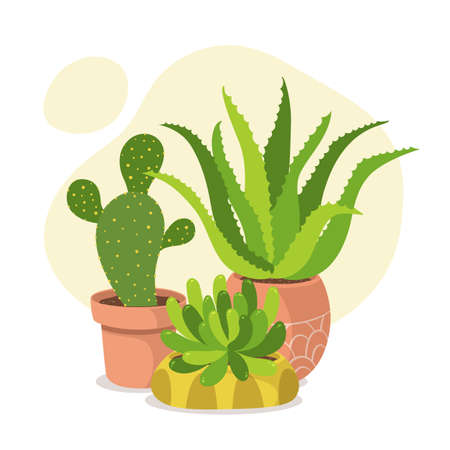 Cute houseplant composition with cacti and succulent plants. Green and healthy decoration.