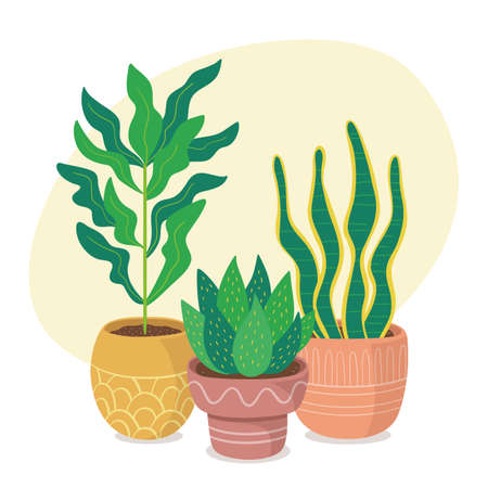 Green houseplants and clay pots composition