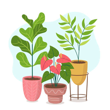 Green houseplants and flowers in colorful pots composition. Indoor decoration concept.