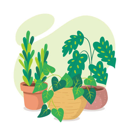 Green houseplants and succulent plant composition. Beautiful indoor plants in clay pots. Иллюстрация