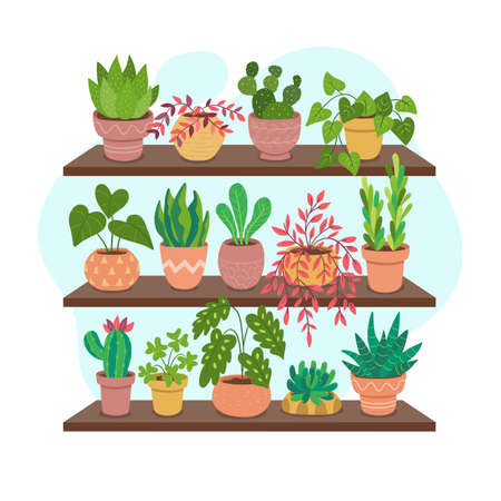 Collection of houseplants on shelves. Beautiful green plants, succulents and cactus. Vectores