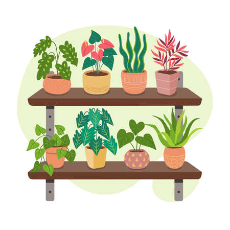 Collection of houseplants on shelves. Indoor decoration concept. Beautiful green plants, succulents and cactus. Vectores