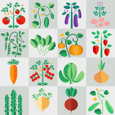 Icons in a flat style vegetable plants, plants for the garden, isolated image, colorful images of vegetables, vector design