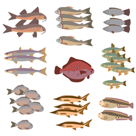 flounder: set of different fish flat style Illustration