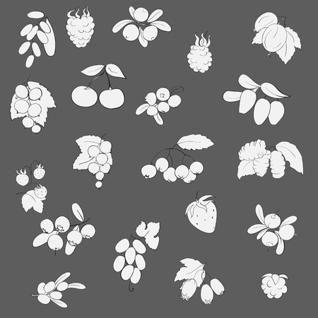 honeysuckle: set fruits and berries, graphics, vector illustration,Black and white fruit on gray background strawberry, raspberry, currant, barberry, blueberries, cranberries, honeysuckle, mulberry, chokeberry, sea buckthorn, grapes, strawberries, hawthorn, blackberri