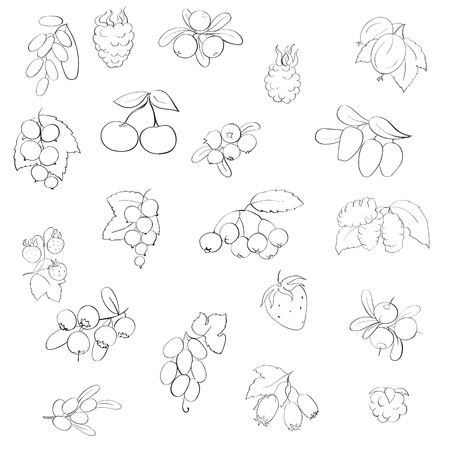 honeysuckle: set fruits and berries, graphics, vector illustration,strawberry, raspberry, currant, barberry, blueberries, cranberries, honeysuckle, mulberry, chokeberry, sea buckthorn, grapes, strawberries, hawthorn, blackberries, gooseberries, cranberries Illustration