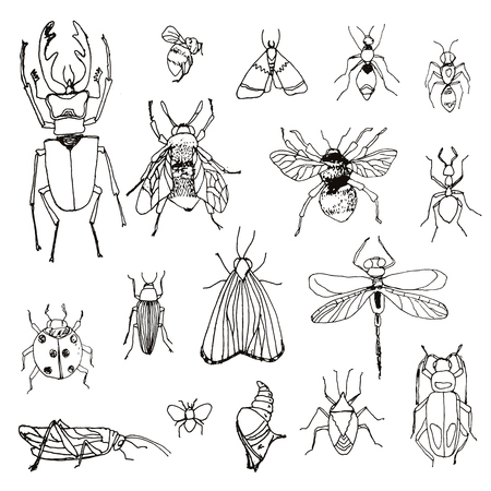 set of insects drawn by hand, sketch