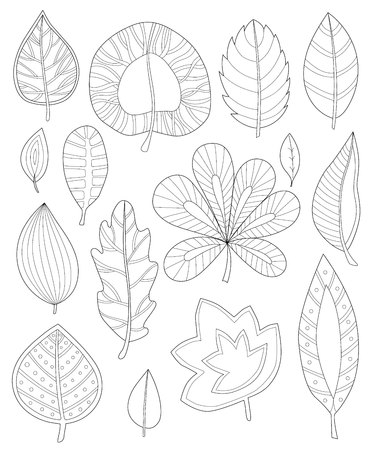 adults: leaves coloring for adults