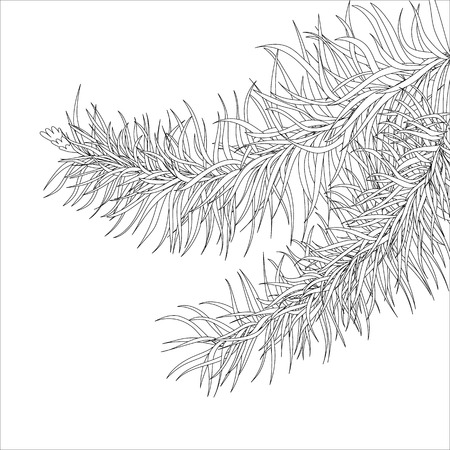 Coloring for adults, fir branch, Page for anti-stress book, hand drawn branch style. Illusztráció