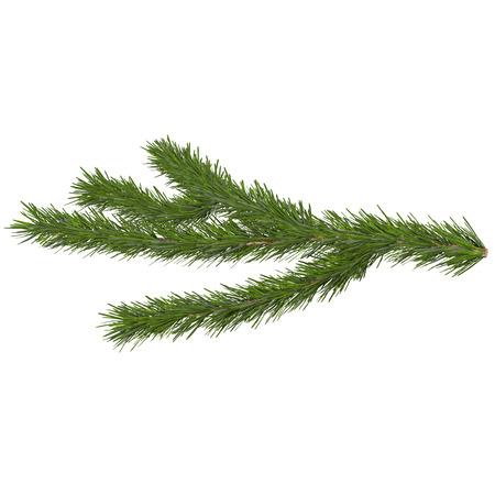 fir tree isolated on white, 3d illustration Imagens