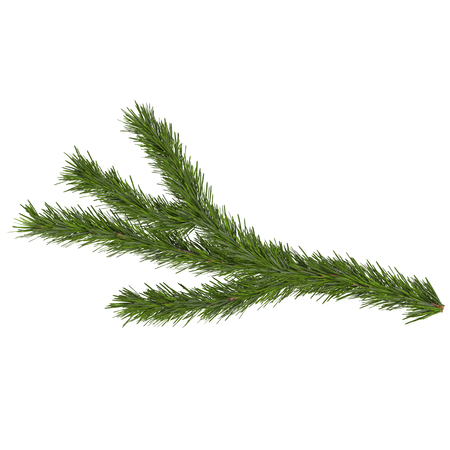 spruce branch, isolated on white background, 3d render