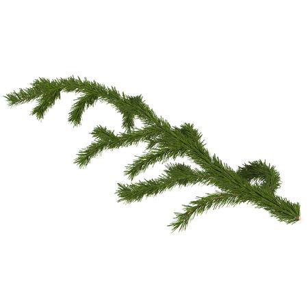 fir branch for design, 3d render