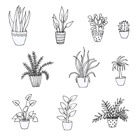 Set of doodles of houseplants