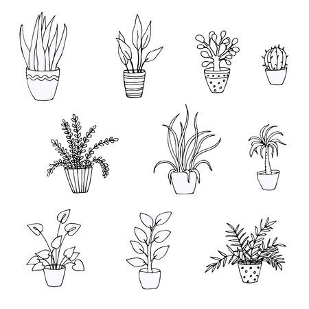 Set of doodles of houseplants