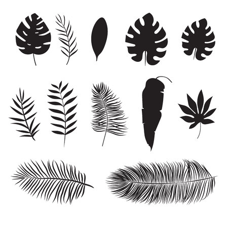 Set of silhouette of tropical leaf