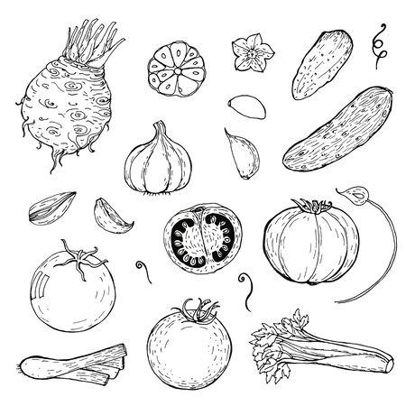 set of hand drawn vegetables. Sketch of tomato, cucumber, garlic, celery, leek. doodle vegetables