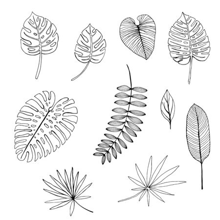 Set of hand drawn tropical leaves. outline drawing