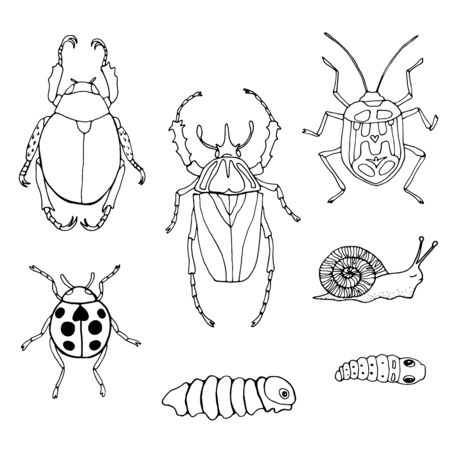 Set of hand drawn beetles and insects. outline drawing