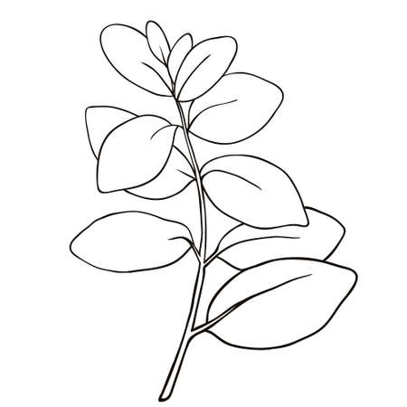 Art foliage natural leaves herbs in line style