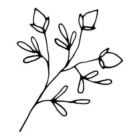 Hand drawn wedding herb, plant? Floral hand drawn doodle icon for social media story. Ink drawn branch Ilustración de vector
