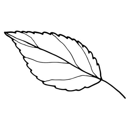 abstract contour leaf isolated on white