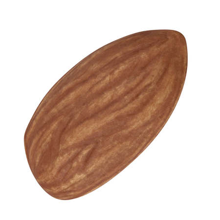 Almond nut isolated on white background. 3d illustration 版權商用圖片
