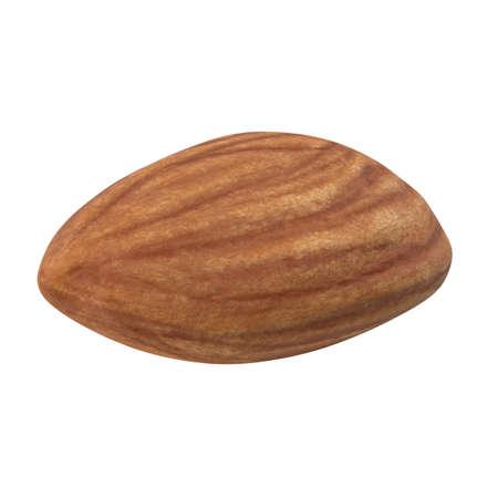 One almond isolated on white background. 3d illustration 版權商用圖片