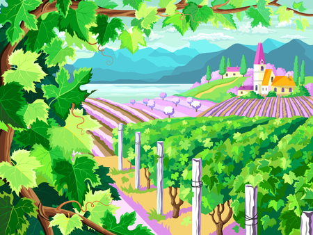 Rural landscape with vineyard, grapes bunches, fields and  sea. Four seasons.  Spring season. (Other seasons in the my portfolio).