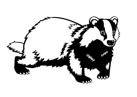 Tejón eurasiático negro y blanco aislado en fondo blanco Ilustración de vector