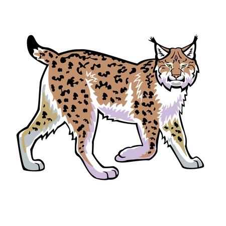lynxs: lynx isol� sur fond vue c�t� blanc