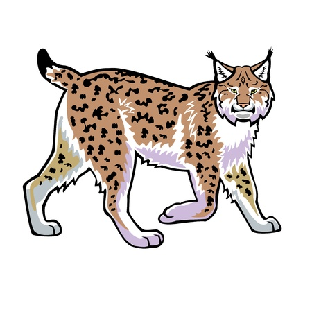 lynx isolated on white background side view