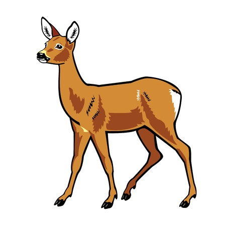 standing one roe deer isolated on white background  Stock Vector - 14641753