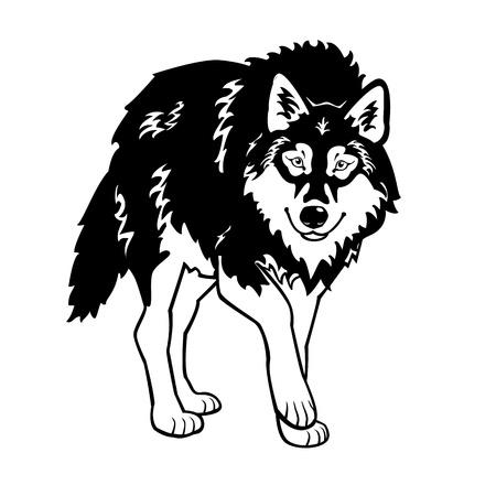 서 늑대, 검은 색과 흰색 배경에 고립 된 흰색