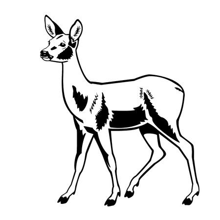 deers: el corzo blanco y negro aislado en blanco, vista lateral de fondo Vectores