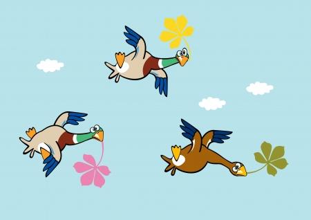wild duck: flying wild ducks holding leaves,blue sky,horizontal cartoon illustration