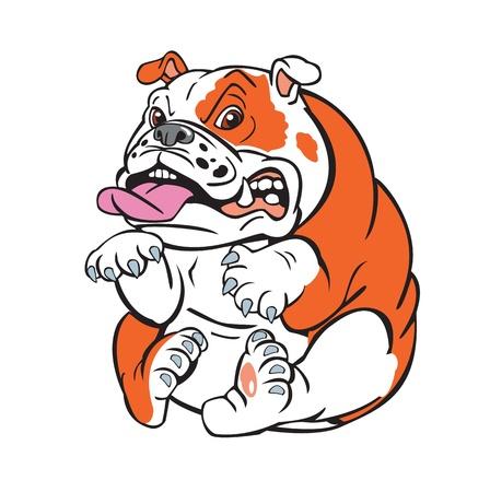 english bulldog: cute bulldog sitting on white background