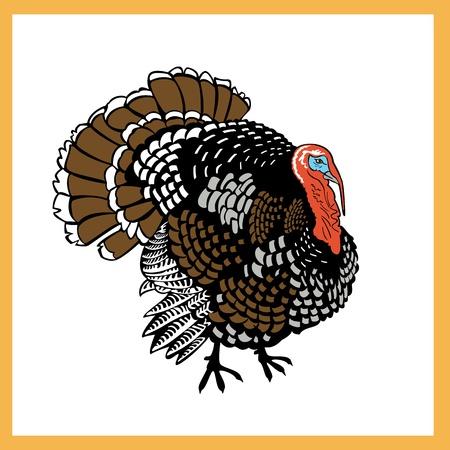standing one turkey isolated on white background  Vector