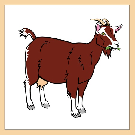 standing brown goat isolated on white background Illustration