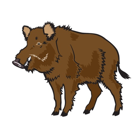 tusk: standing wild boar isolated on white background Illustration