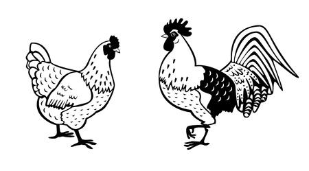 animal cock: gallo in piedi e gallina in bianco e nero isolato su sfondo bianco vista laterale