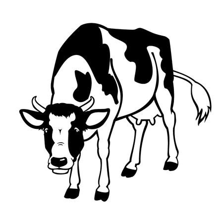 standing cow black and white isolated on white background