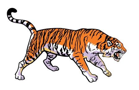 attackera Sibirisk tiger horisontell bild isolerad på vit bakgrund Illustration