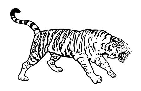 tigresa: atacando siberiano tigre negro y blanco aislado en fondo blanco