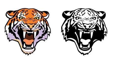 isolated tiger: vista frontale testa di tigre isolato su sfondo bianco