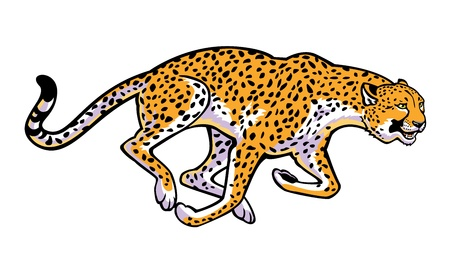 chita: guepardo corriendo horizontal imagen aislada en el fondo blanco