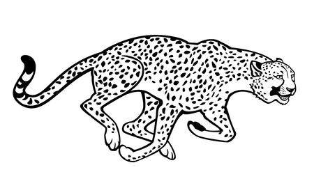 acinonyx jubatus: running cheetah black and white horizontal image isolated on white background