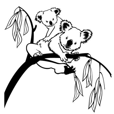 koalabeer: koala beer met joey klimmen eucalyptusboom zwart-wit foto geïsoleerd op witte achtergrond