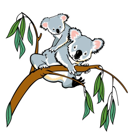 arboreal: koala with joey climbing eucalyptus tree,picture isolated on white background